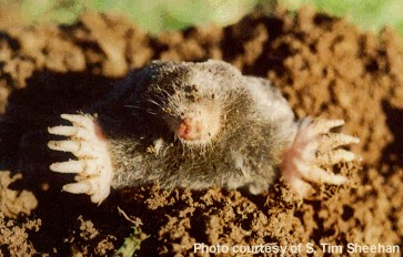 Moles are cool people.