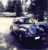 My wee beetle!